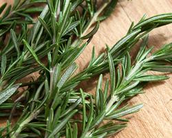 how to make rosemary leaf tea